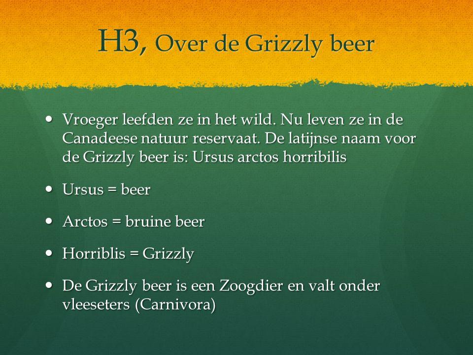 H3, Over de Grizzly beer Vroeger leefden ze in het wild. Nu leven ze in de Canadeese natuur reservaat. De latijnse naam voor de Grizzly beer is: Ursus