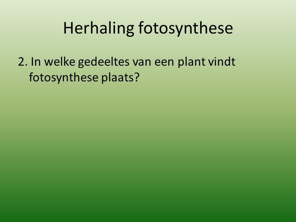 Herhaling fotosynthese 2.In alle groene delen van een plant vindt fotosynthese plaats.