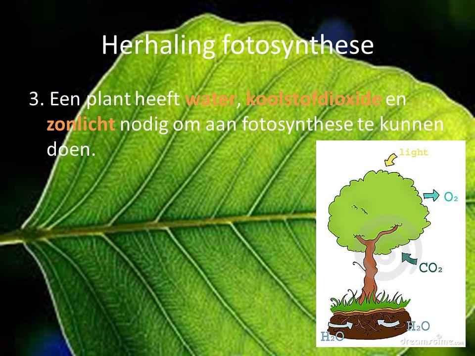 Herhaling fotosynthese 3. Een plant heeft water, koolstofdioxide en zonlicht nodig om aan fotosynthese te kunnen doen.