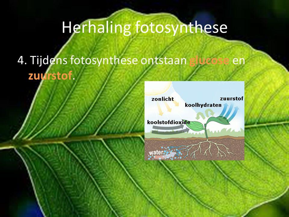 Herhaling fotosynthese 4. Tijdens fotosynthese ontstaan glucose en zuurstof.