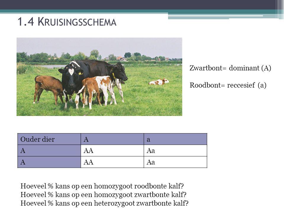 1.4 K RUISINGSSCHEMA Zwartbont= dominant (A) Roodbont= reccesief (a) Ouder dierAa AAAAa AAAAa Hoeveel % kans op een homozygoot roodbonte kalf.