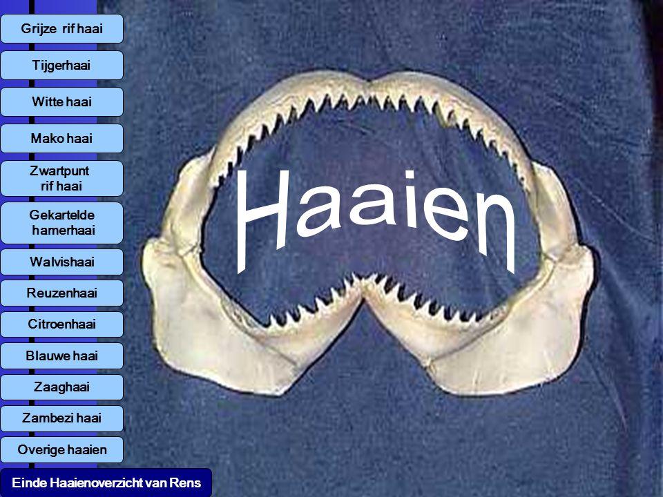 Grijze rif haai Tijgerhaai Witte haai Mako haai Zwartpunt rif haai Walvishaai Reuzenhaai Citroenhaai Blauwe haai Zambezi haai Overige haaien Zaaghaai Gekartelde hamerhaai Einde Haaienoverzicht van Rens