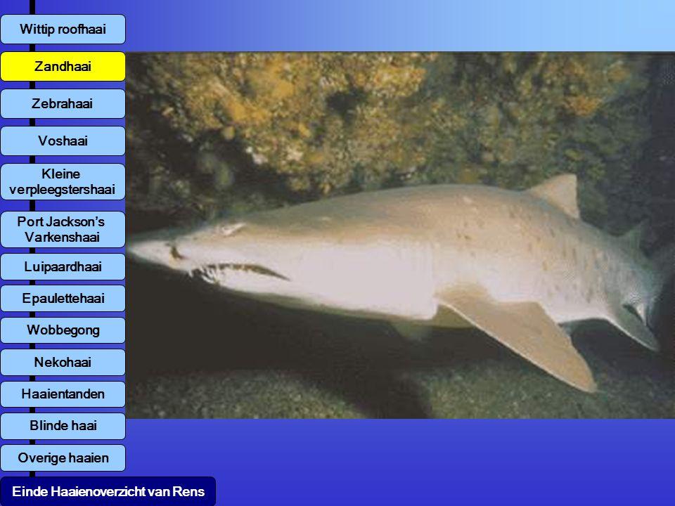 Overige haaien Wittip roofhaai Zandhaai Zebrahaai Voshaai Kleine verpleegstershaai Luipaardhaai Einde Haaienoverzicht van Rens Port Jackson's Varkensh