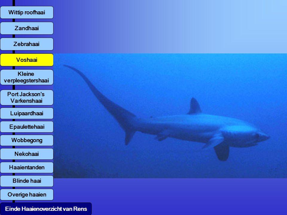 Wittip roofhaai Zebrahaai Zandhaai Voshaai Kleine verpleegstershaai Overige haaien Luipaardhaai Einde Haaienoverzicht van Rens Port Jackson's Varkensh