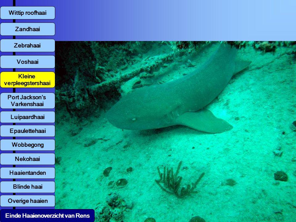 Wittip roofhaai Voshaai Zandhaai Zebrahaai Kleine verpleegstershaai Overige haaien Luipaardhaai Einde Haaienoverzicht van Rens Port Jackson's Varkensh