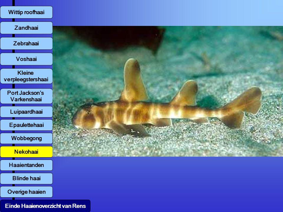 Overige haaien Wittip roofhaai Zebrahaai Kleine verpleegstershaai Zandhaai Voshaai Luipaardhaai Einde Haaienoverzicht van Rens Port Jackson's Varkensh