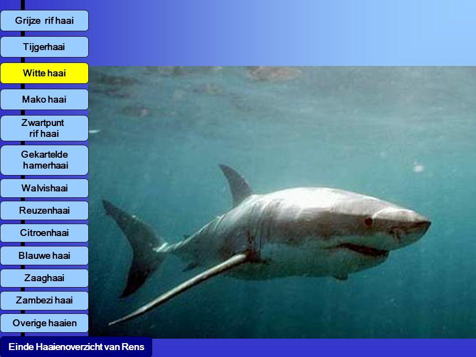 Overige haaien Wittip roofhaai Zandhaai Zebrahaai Voshaai Kleine verpleegstershaai Luipaardhaai Einde Haaienoverzicht van Rens Port Jackson's Varkenshaai Epaulettehaai Nekohaai Haaientanden Blinde haai Wobbegong