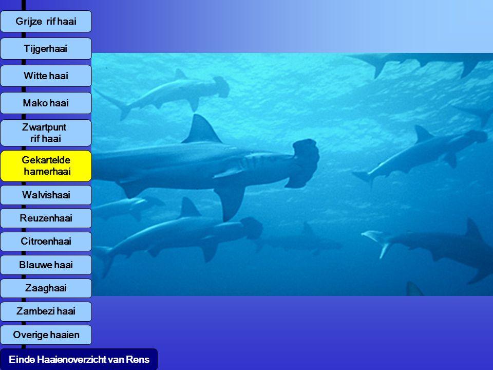 Gekartelde hamerhaai Tijgerhaai Witte haai Mako haai Zwartpunt rif haai Walvishaai Reuzenhaai Citroenhaai Blauwe haai Zambezi haai Overige haaien Zaaghaai Grijze rif haai Einde Haaienoverzicht van Rens