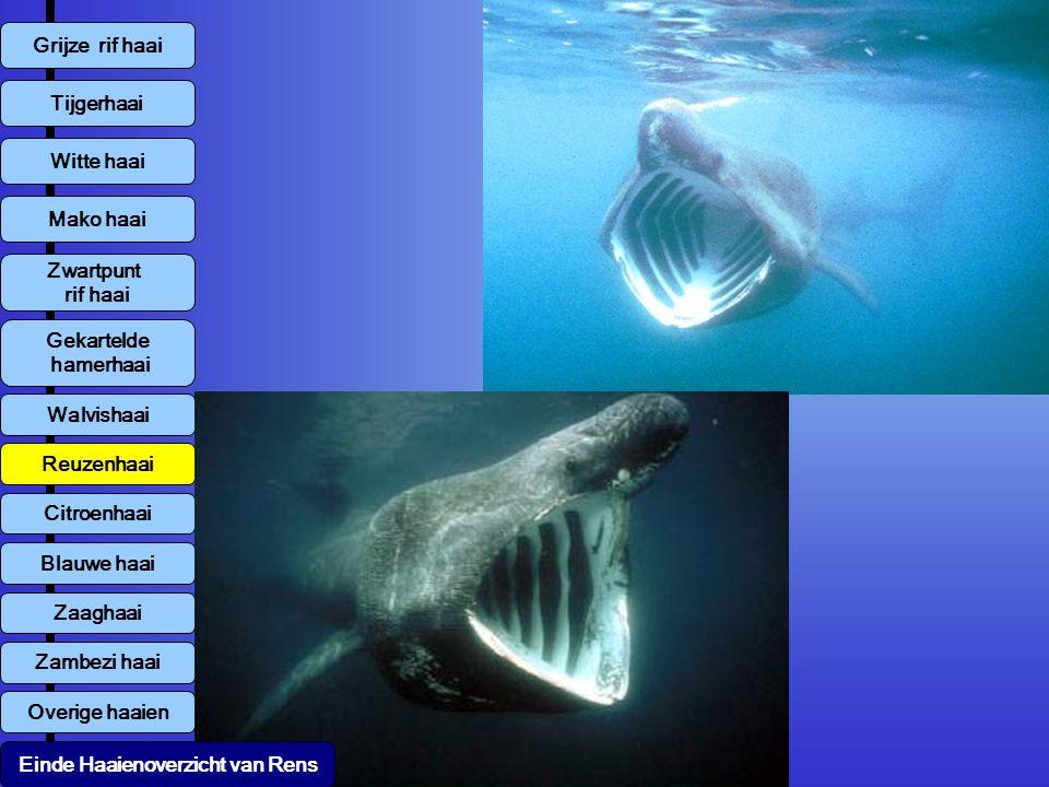 Tijgerhaai Witte haai Mako haai Zwartpunt rif haai Walvishaai Reuzenhaai Citroenhaai Blauwe haai Zambezi haai Overige haaien Zaaghaai Gekartelde hamer