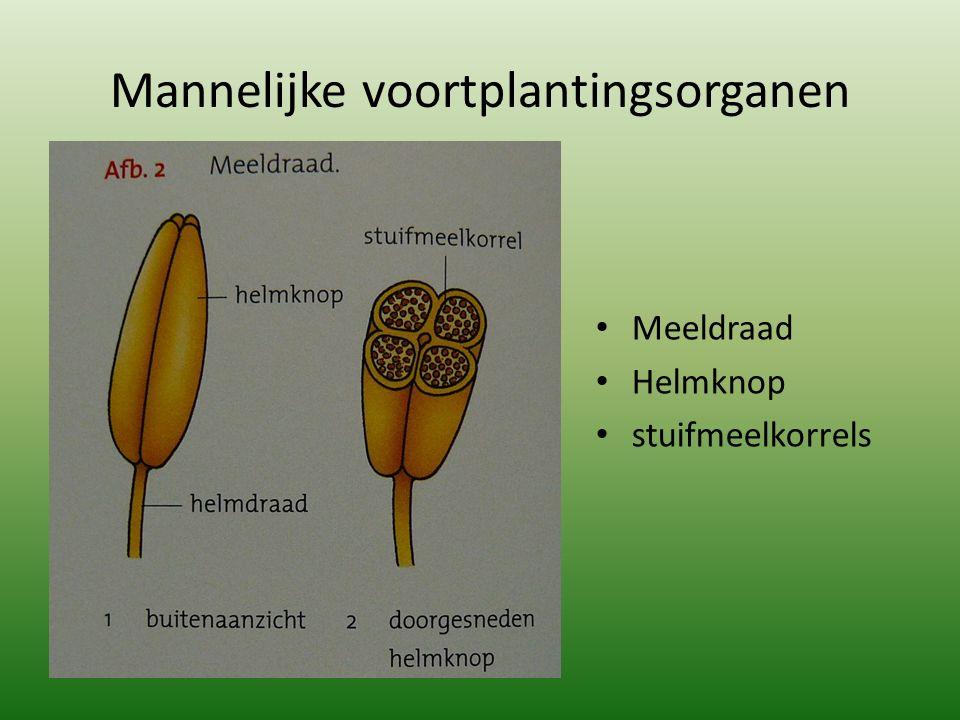Mannelijke voortplantingsorganen Meeldraad Helmknop stuifmeelkorrels
