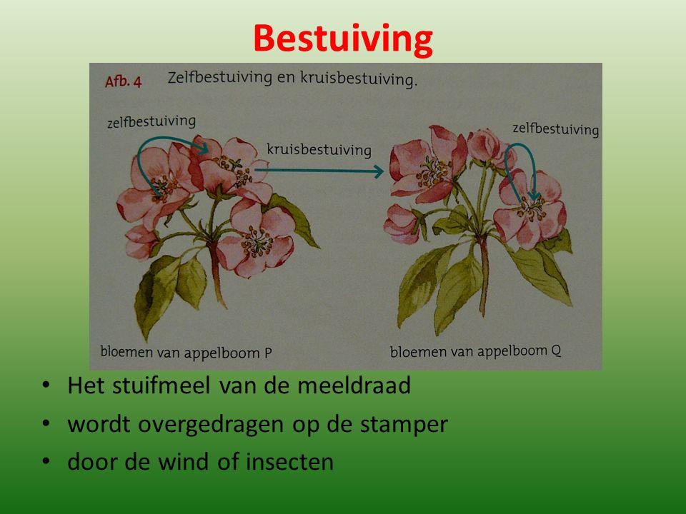 Bestuiving Het stuifmeel van de meeldraad wordt overgedragen op de stamper door de wind of insecten