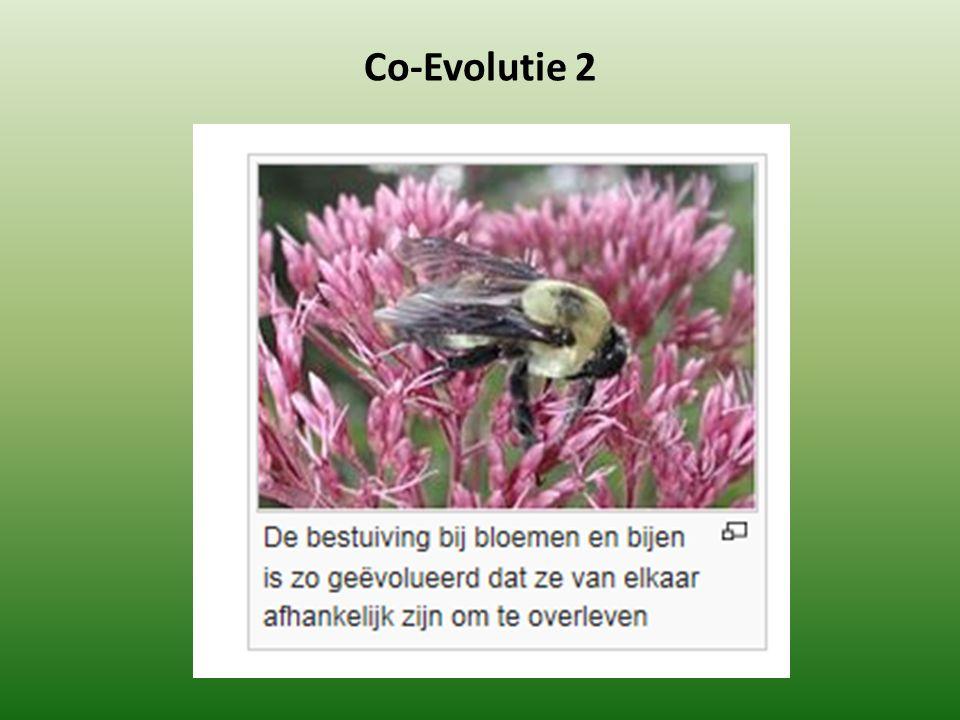 Co-Evolutie 2
