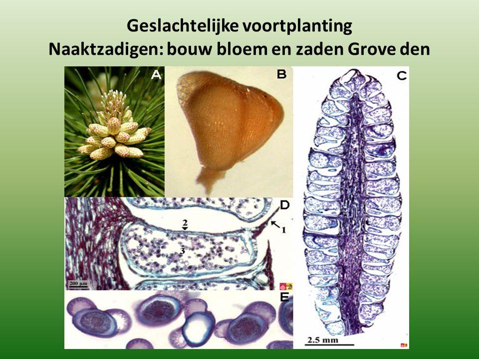 Geslachtelijke voortplanting Naaktzadigen: bouw bloem en zaden Grove den