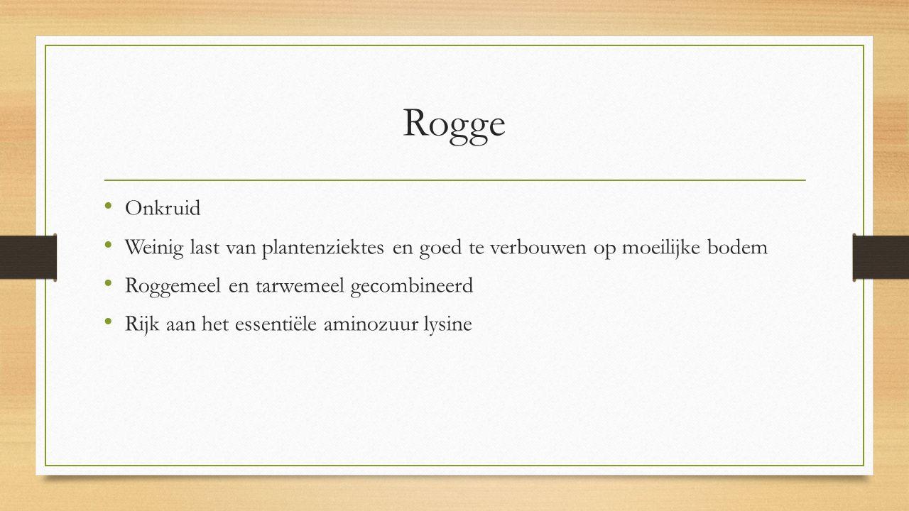 Rogge Onkruid Weinig last van plantenziektes en goed te verbouwen op moeilijke bodem Roggemeel en tarwemeel gecombineerd Rijk aan het essentiële aminozuur lysine