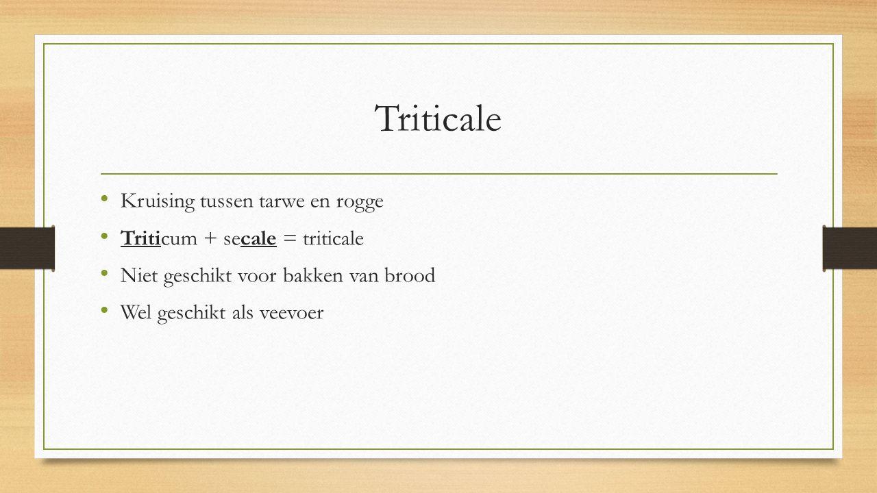 Triticale Kruising tussen tarwe en rogge Triticum + secale = triticale Niet geschikt voor bakken van brood Wel geschikt als veevoer