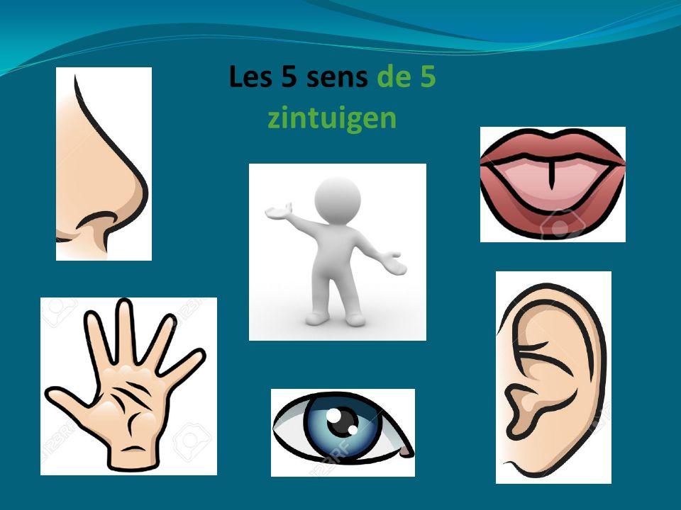 Les 5 sens de 5 zintuigen
