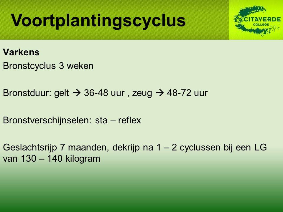 Varkens Bronstcyclus 3 weken Bronstduur: gelt  36-48 uur, zeug  48-72 uur Bronstverschijnselen: sta – reflex Geslachtsrijp 7 maanden, dekrijp na 1 – 2 cyclussen bij een LG van 130 – 140 kilogram Voortplantingscyclus