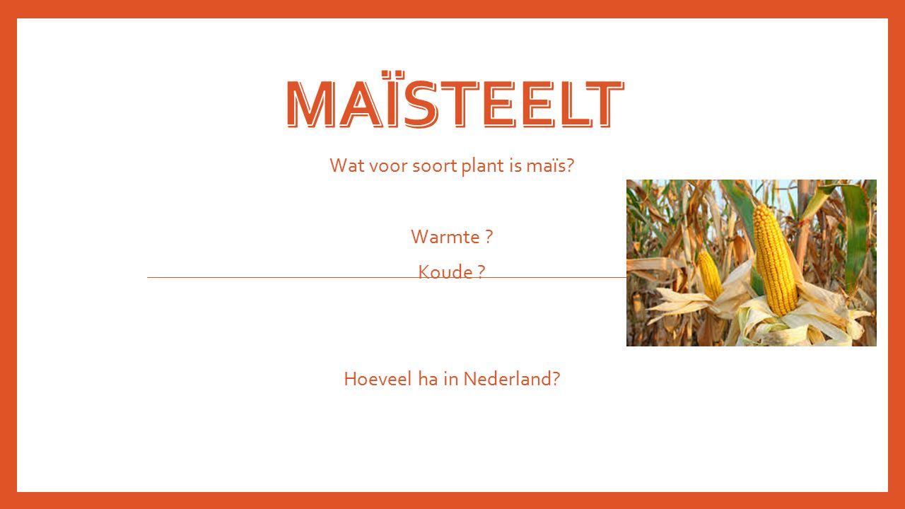 Wat voor soort plant is maïs? Warmte ? Koude ? Hoeveel ha in Nederland?