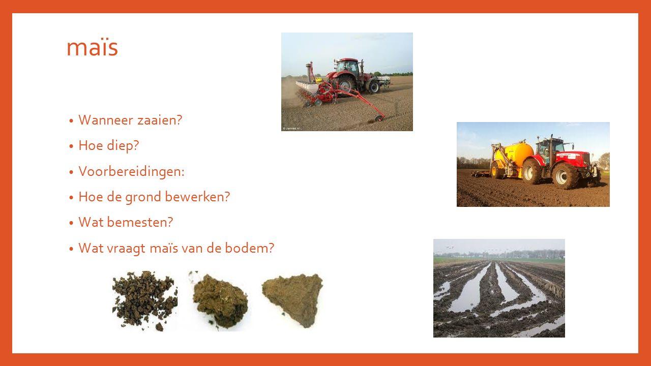 maïs Wanneer zaaien? Hoe diep? Voorbereidingen: Hoe de grond bewerken? Wat bemesten? Wat vraagt maïs van de bodem?