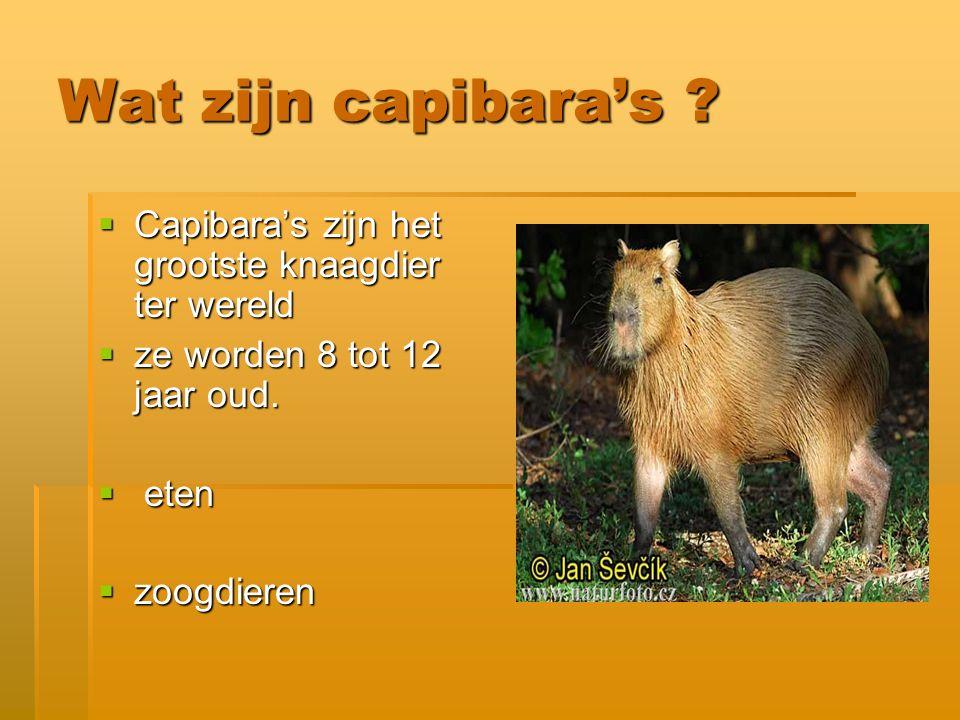 Waar leven capibara's .het waterrijke gebied van Brazilië.