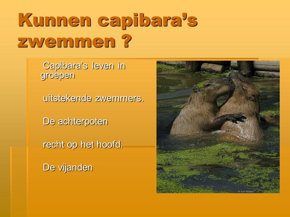 Mannetjes capibara's Grote mannetjes Grote mannetjes fossielen fossielen Noord-Amerikaanse grizzlybeer.