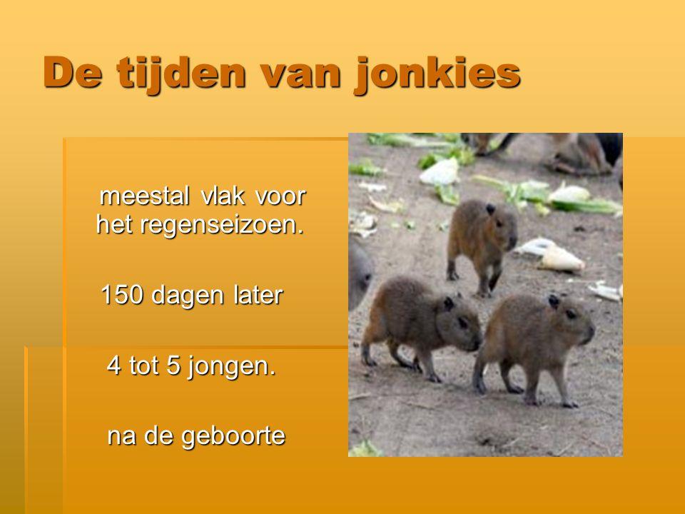 Hoe groot worden Capibara s .en worden Capibara s ook als huisdier gehouden.