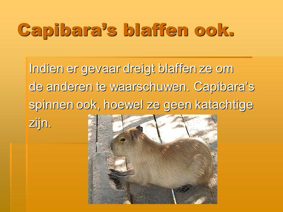 Interessant om te weten.De Capibara is ook een van die leuke bizarre dieren.