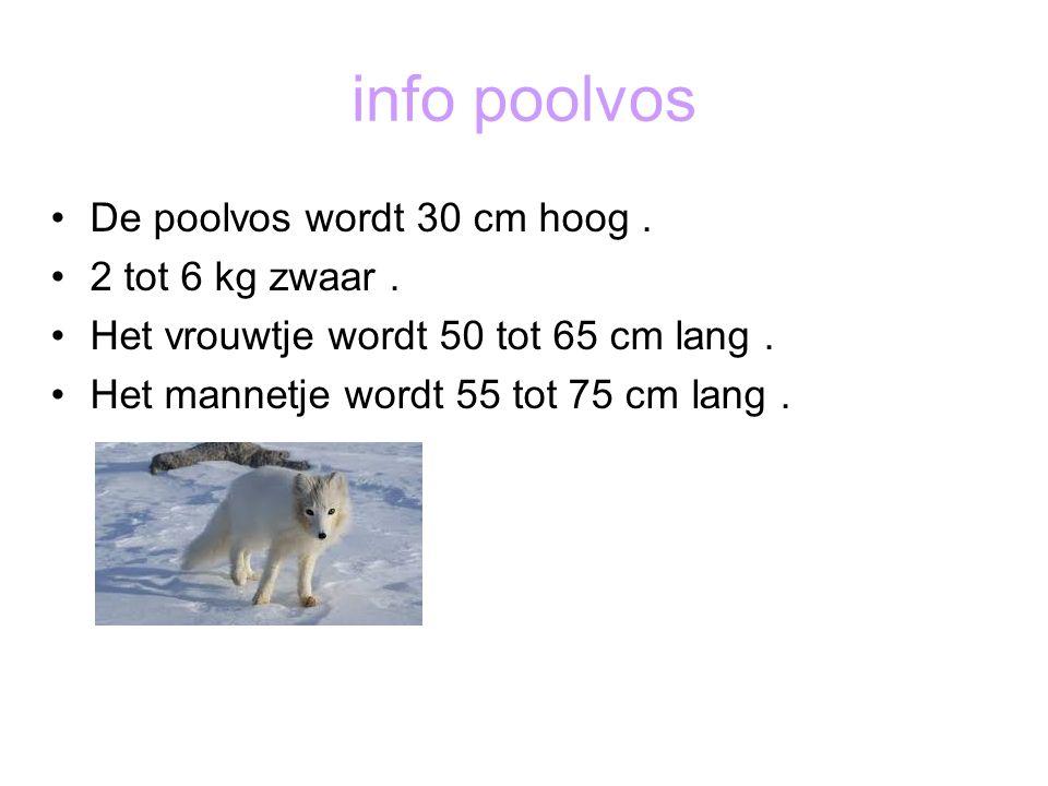 info poolvos De poolvos wordt 30 cm hoog. 2 tot 6 kg zwaar. Het vrouwtje wordt 50 tot 65 cm lang. Het mannetje wordt 55 tot 75 cm lang.