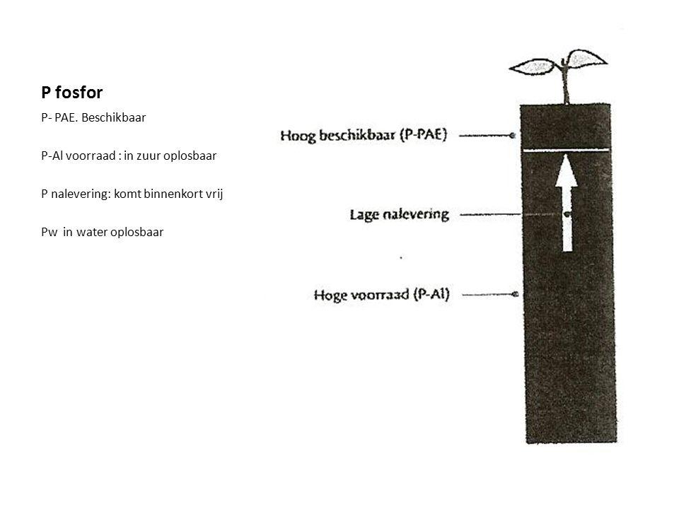 P fosfor P- PAE.