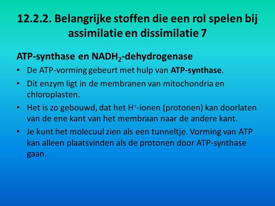 12.2.2. Belangrijke stoffen die een rol spelen bij assimilatie en dissimilatie 7 ATP-synthase en NADH 2 -dehydrogenase De ATP-vorming gebeurt met hulp