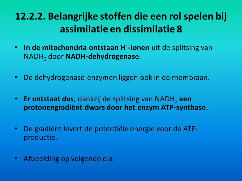 12.2.2. Belangrijke stoffen die een rol spelen bij assimilatie en dissimilatie 8 In de mitochondria ontstaan H + -ionen uit de splitsing van NADH 2 do