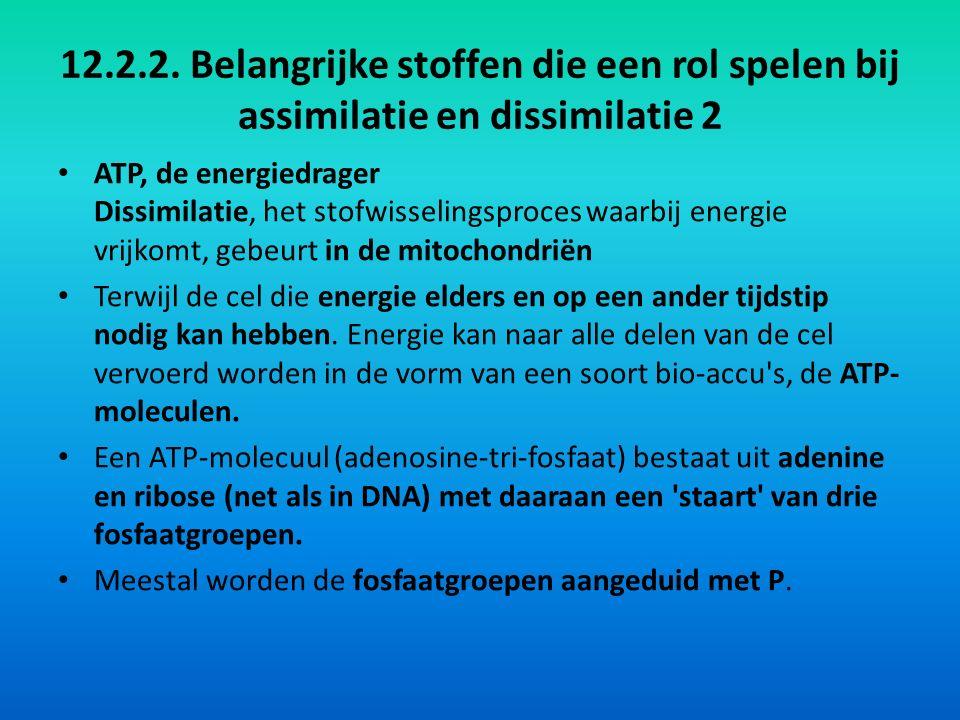 12.2.2. Belangrijke stoffen die een rol spelen bij assimilatie en dissimilatie 2 ATP, de energiedrager Dissimilatie, het stofwisselingsproces waarbij