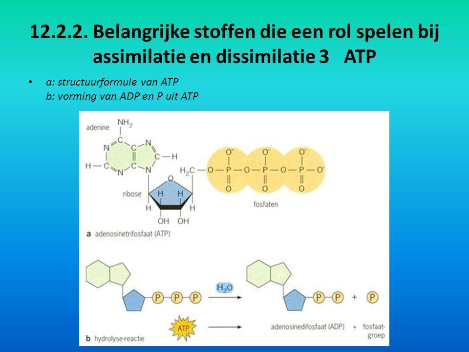 12.2.2. Belangrijke stoffen die een rol spelen bij assimilatie en dissimilatie 3 ATP a: structuurformule van ATP b: vorming van ADP en P uit ATP