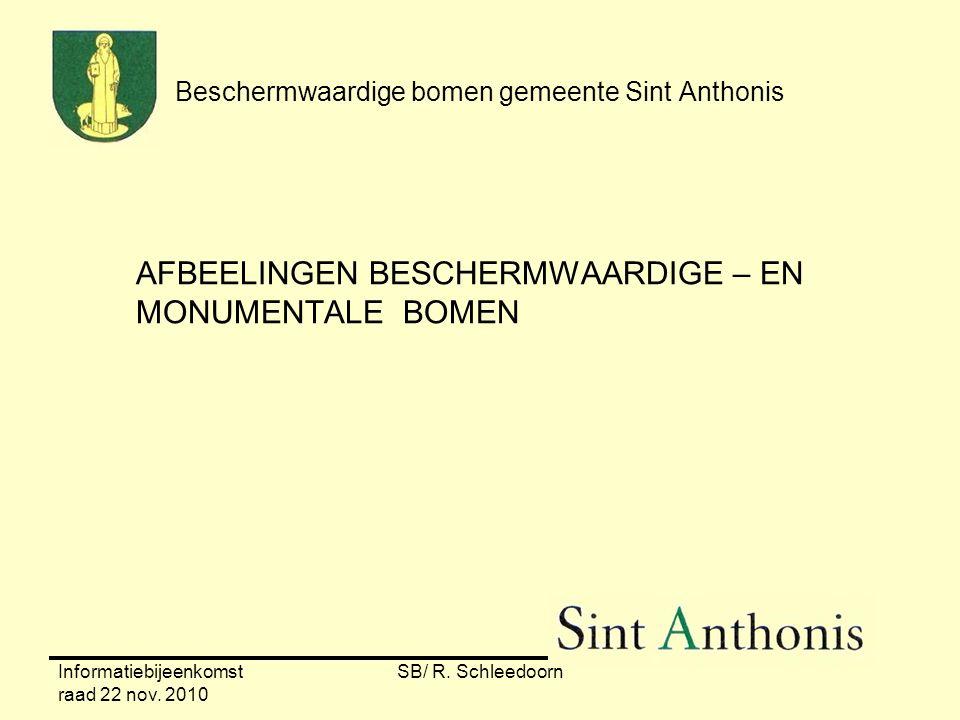 Informatiebijeenkomst raad 22 nov. 2010 SB/ R. Schleedoorn Beschermwaardige bomen gemeente Sint Anthonis AFBEELINGEN BESCHERMWAARDIGE – EN MONUMENTALE