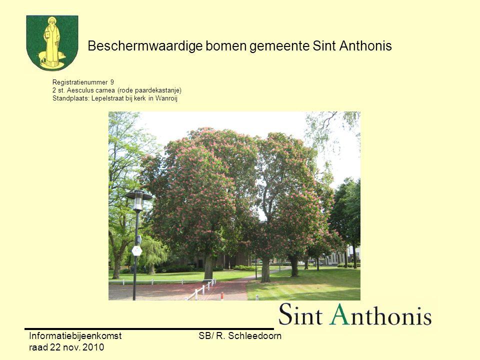 Informatiebijeenkomst raad 22 nov. 2010 SB/ R. Schleedoorn Beschermwaardige bomen gemeente Sint Anthonis Registratienummer 9 2 st. Aesculus carnea (ro
