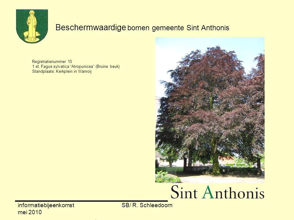 """informatiebijeenkomst mei 2010 SB/ R. Schleedoorn Registratienummer 15 1 st. Fagus sylvatica """"Atropunicea"""" (Bruine beuk) Standplaats: Kerkplein in Wan"""