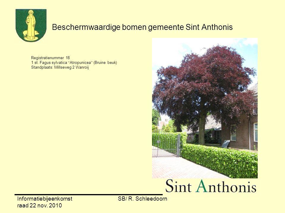 """Informatiebijeenkomst raad 22 nov. 2010 SB/ R. Schleedoorn Beschermwaardige bomen gemeente Sint Anthonis Registratienummer 18 1 st. Fagus sylvatica """"A"""