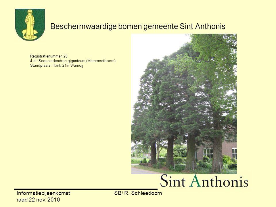 Informatiebijeenkomst raad 22 nov. 2010 SB/ R. Schleedoorn Beschermwaardige bomen gemeente Sint Anthonis Registratienummer 20 4 st. Sequoiadendron gig
