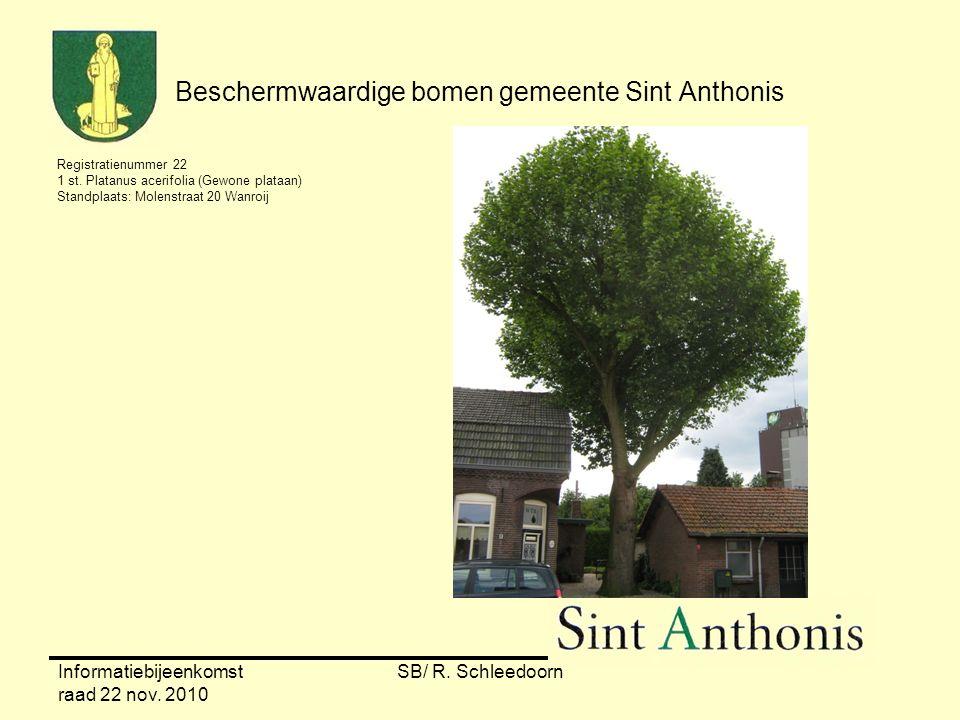Informatiebijeenkomst raad 22 nov. 2010 SB/ R. Schleedoorn Beschermwaardige bomen gemeente Sint Anthonis Registratienummer 22 1 st. Platanus acerifoli