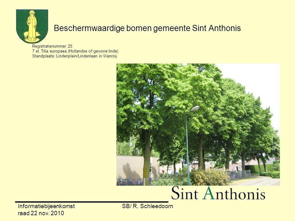 Informatiebijeenkomst raad 22 nov. 2010 SB/ R. Schleedoorn Beschermwaardige bomen gemeente Sint Anthonis Registratienummer 25 7 st. Tilia europaea (Ho