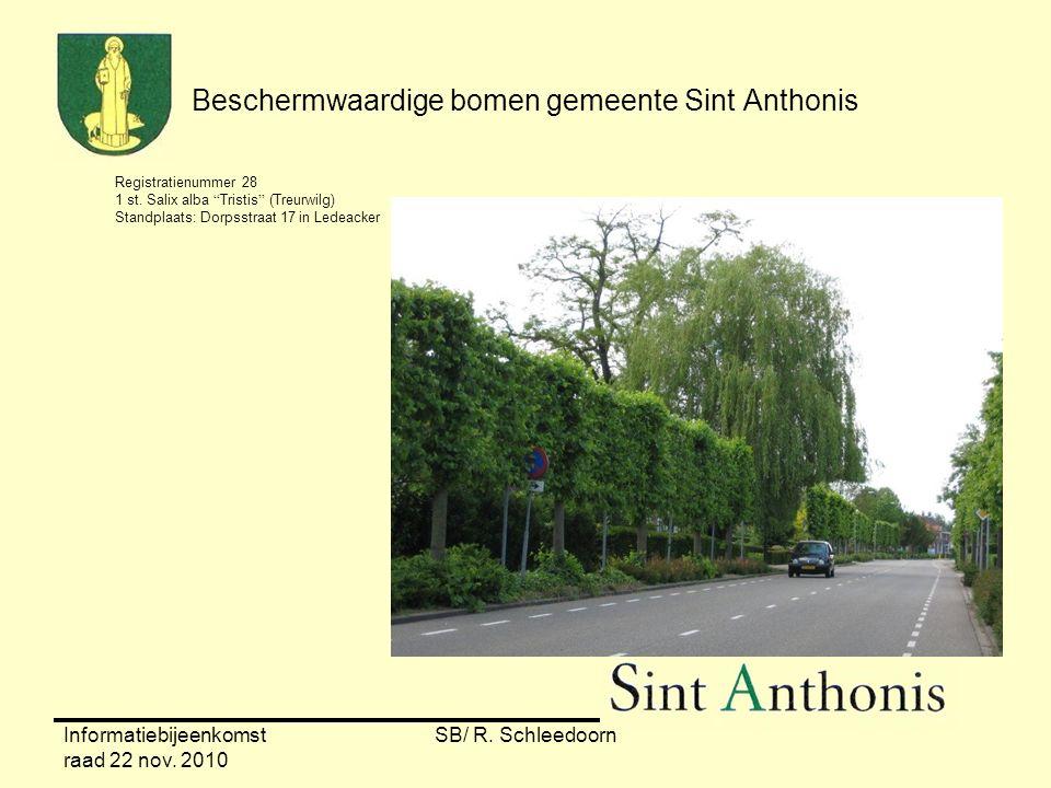 """Informatiebijeenkomst raad 22 nov. 2010 SB/ R. Schleedoorn Beschermwaardige bomen gemeente Sint Anthonis Registratienummer 28 1 st. Salix alba """"Tristi"""
