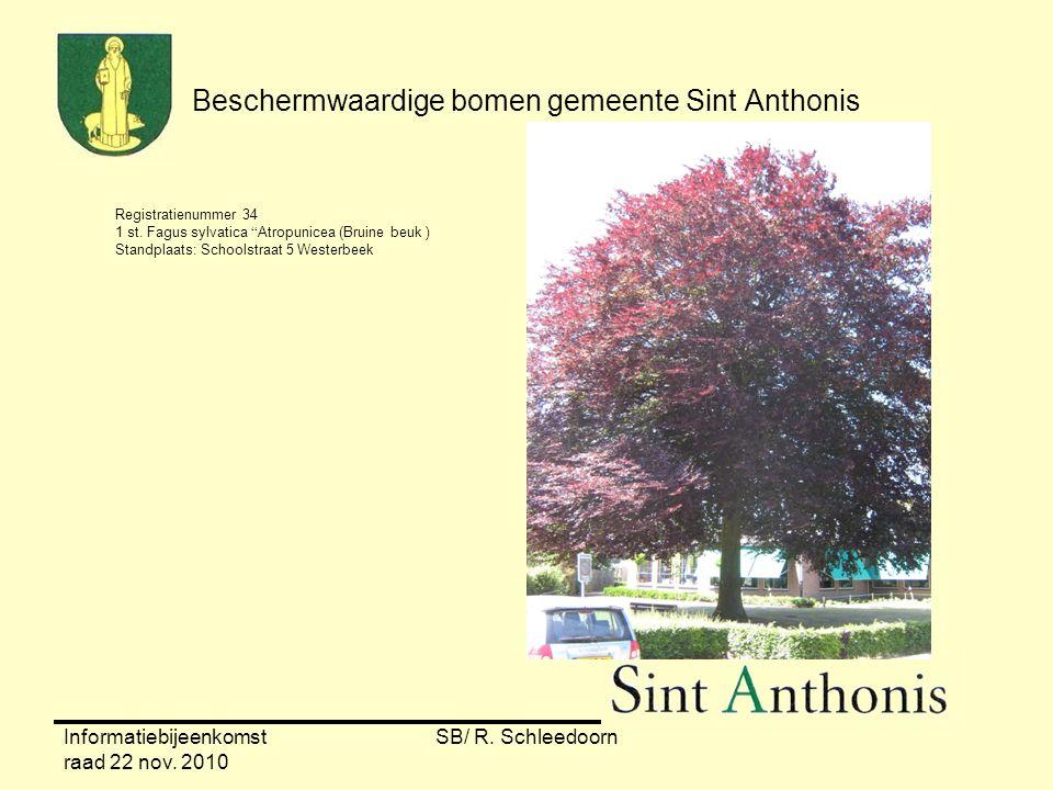 """Informatiebijeenkomst raad 22 nov. 2010 SB/ R. Schleedoorn Beschermwaardige bomen gemeente Sint Anthonis Registratienummer 34 1 st. Fagus sylvatica """"A"""