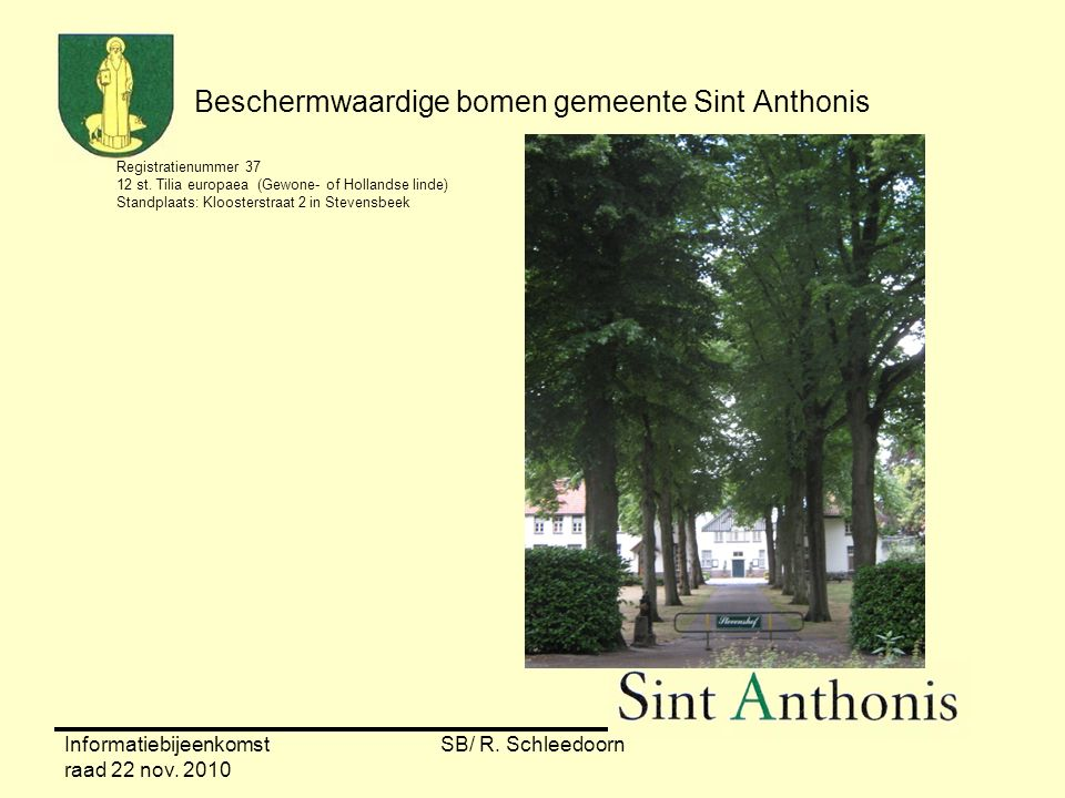 Informatiebijeenkomst raad 22 nov. 2010 SB/ R. Schleedoorn Beschermwaardige bomen gemeente Sint Anthonis Registratienummer 37 12 st. Tilia europaea (G