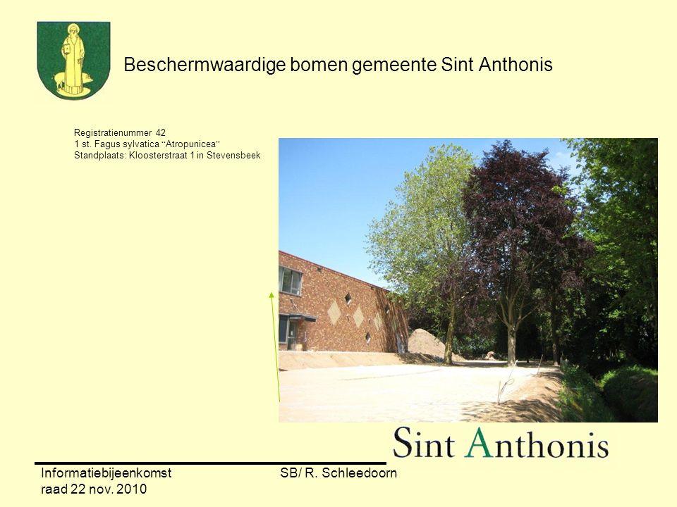 """Informatiebijeenkomst raad 22 nov. 2010 SB/ R. Schleedoorn Beschermwaardige bomen gemeente Sint Anthonis Registratienummer 42 1 st. Fagus sylvatica """"A"""