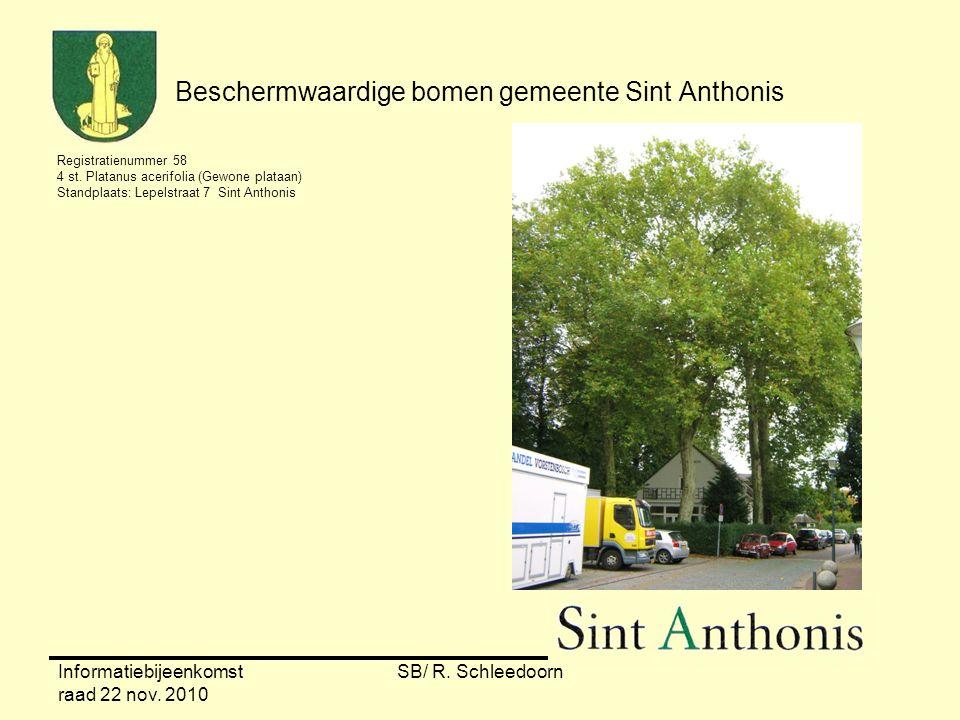 Informatiebijeenkomst raad 22 nov. 2010 SB/ R. Schleedoorn Beschermwaardige bomen gemeente Sint Anthonis Registratienummer 58 4 st. Platanus acerifoli