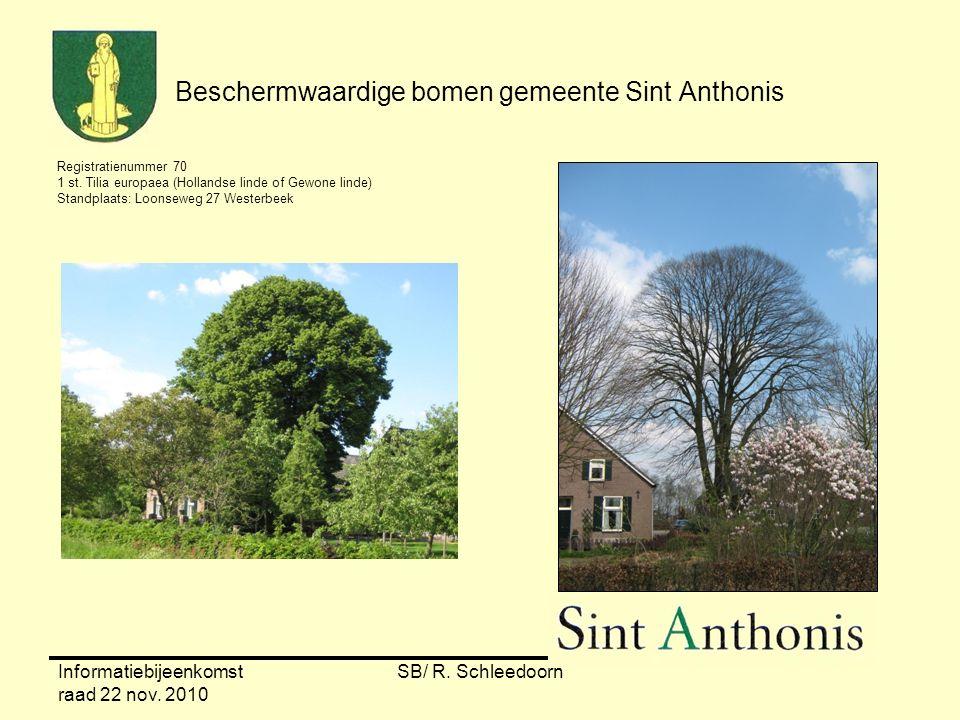 Informatiebijeenkomst raad 22 nov. 2010 SB/ R. Schleedoorn Beschermwaardige bomen gemeente Sint Anthonis Registratienummer 70 1 st. Tilia europaea (Ho