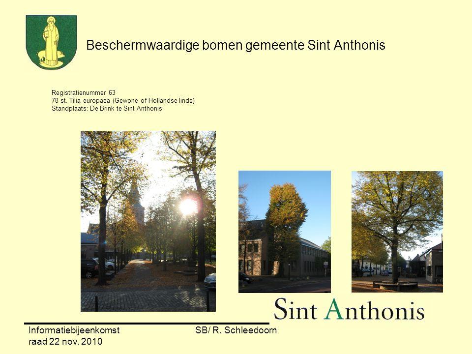 Informatiebijeenkomst raad 22 nov. 2010 SB/ R. Schleedoorn Beschermwaardige bomen gemeente Sint Anthonis Registratienummer 63 78 st. Tilia europaea (G