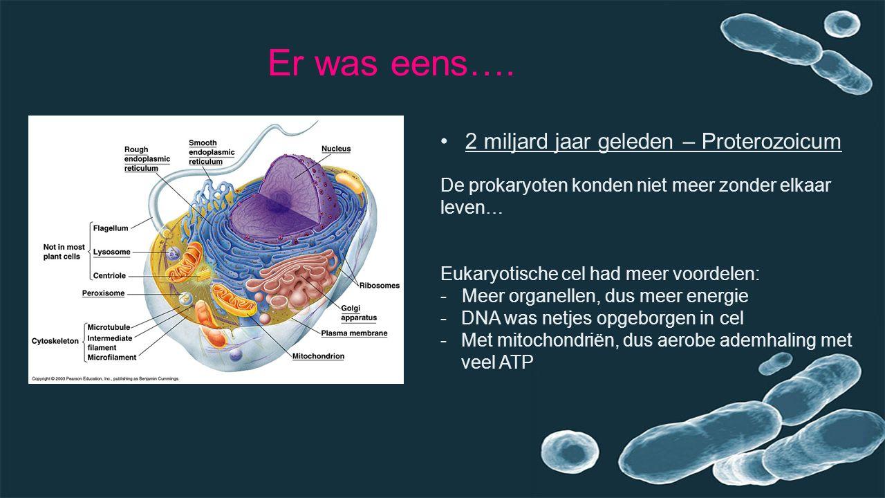 Er was eens…. 2 miljard jaar geleden – Proterozoicum De prokaryoten konden niet meer zonder elkaar leven… Eukaryotische cel had meer voordelen: - Meer
