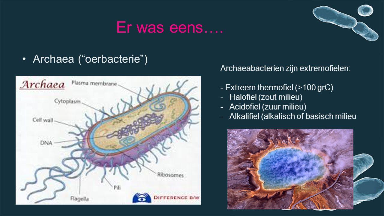 """Er was eens…. Archaea (""""oerbacterie"""") Archaeabacterien zijn extremofielen: - Extreem thermofiel (>100 grC) -Halofiel (zout milieu) -Acidofiel (zuur mi"""