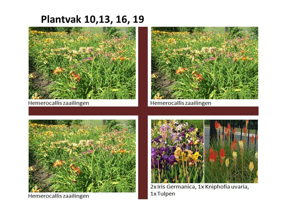 Plantvak 10,13, 16, 19